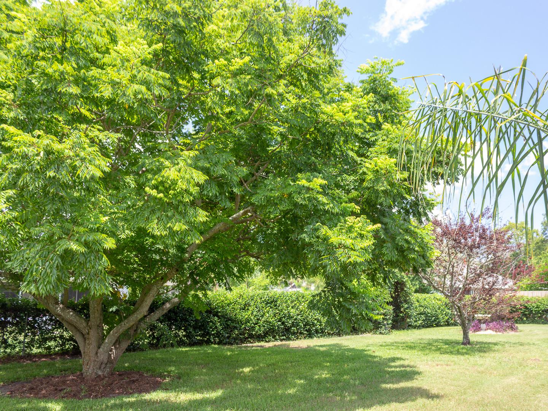 35308 Maple Leaf Drive, Fruitland Park, FL 34371 (119 of 36)
