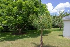 35308 Maple Leaf Drive, Fruitland Park, FL 34371 (108 of 36)